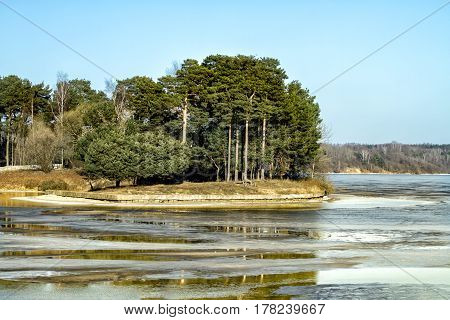 Forest Near Lagoon In Winter