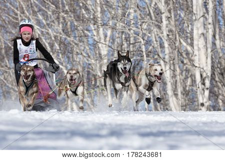 PETROPAVLOVSK-KAMCHATSKY KAMCHATKA PENINSULA RUSSIA - FEBRUARY 23 2017: Kamchatka Kids Competitions Sled Dog Race Dyulin (Beringia). Runs dog sled young Kamchatka musher Krivogornitsyna Christina.
