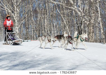 PETROPAVLOVSK-KAMCHATSKY KAMCHATKA PENINSULA RUSSIA - FEBRUARY 23 2017: Kamchatka Kids Competitions Sled Dog Race Dyulin (Beringia). Runs dog sled young Kamchatka musher Maria Kazantseva.