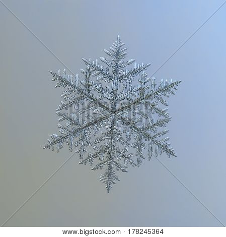 Macro photo of real snowflake: very large and complex snow crystal of fernlike dendrite type (approximately 8 millimeters from tip to tip) with six long, ornate arms, lots of side branches and icy