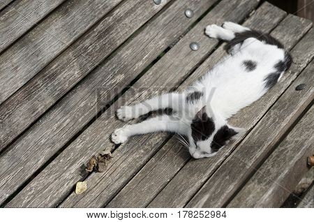 Small sleeping cat on the wooden bench