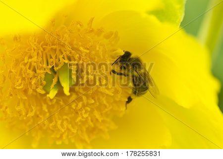 Blüte, bloomy, gelb, yellow, Wespe, wasp, Blume, flower, Makro, macro