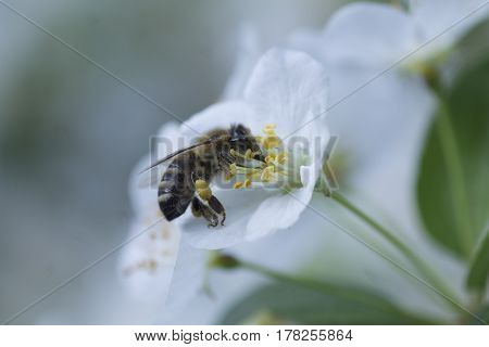 Blüte bloomy weiß white Wespe wasp Blume flower Makro macro