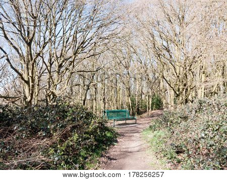 A forest shot with a bench in the middle