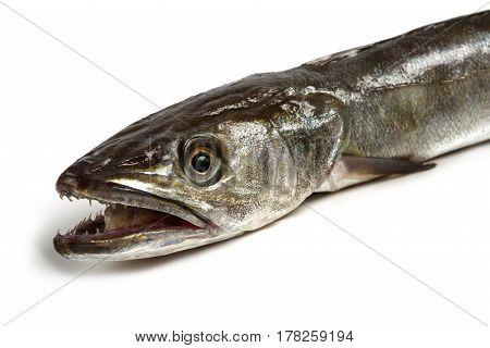 fresh Hake fish isolated on white background