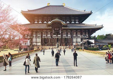 NARA JAPAN - MARCH 24: Cherry Blossom Tree outside Todai-ji Temple in Nara Japan