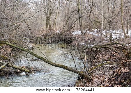 Branch Of A Tree Across A Stream
