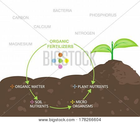 Diagram of nutrients in organic fertilizers. Vector illustration flat design