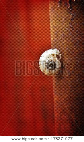 Close up of Snail on a rusty Iron Bar