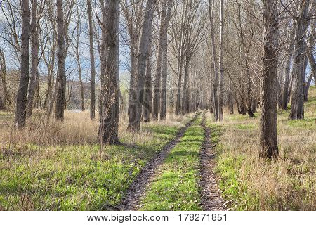 country road through the forest in the spring