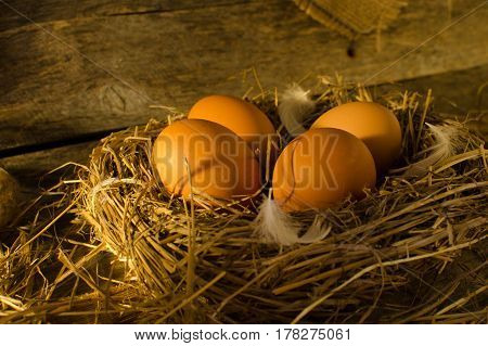 Chicken eggs in the chicken coop early in the morning