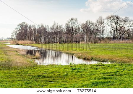 Rural landscape with bare trees withered reed plants and a natural pond in the Netherlands. Springtime has just begun.
