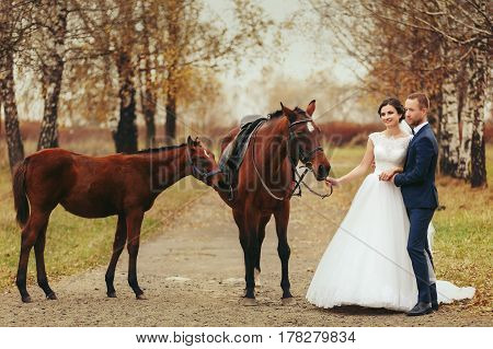 Bride And Groom Stand On The Autumn Road With Horses