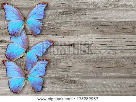 Blue Butterfly On  Wood Background