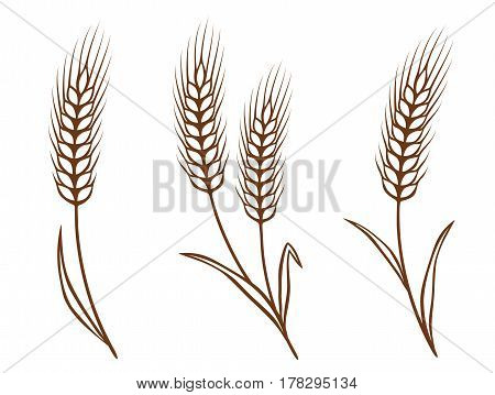 isolated wheat ears set on white background
