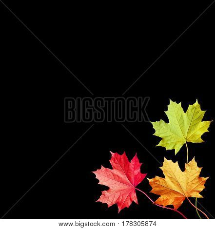 autumn leaves isolated on black background. Golden autumn.