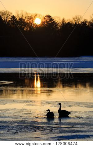 Two Canada Geese (branta canadensis) silhouettes sitting on a frozen lake in Wisconsin.