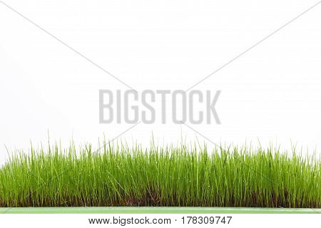 Wet grass field isolated on white background