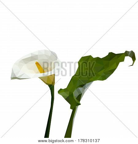 Isolated flower of white calla with green leaf composed of triangles on white background.