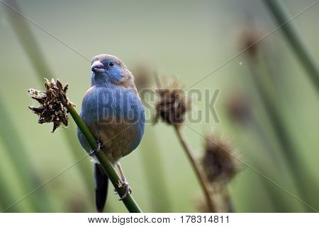 Portrait of a beautiful African small bird of unusual color sitting on a branch Kenya