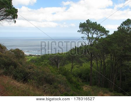 LANDSCAPE, WITH TREES IN FORE GROUND AND THE SEA AND THE CLOUDS IN THE BACK GROUND