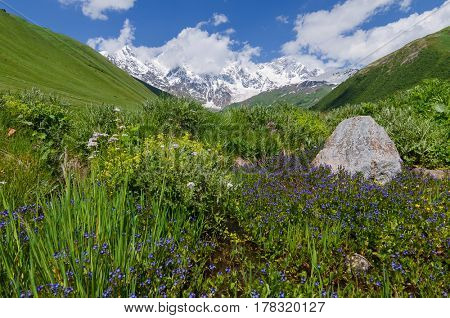 Summer landscape with flowers in a mountain valley. Beauty in nature. Sunny day. View of the Main Caucasian Range with snowy peaks. Zemo Svaneti, Georgia