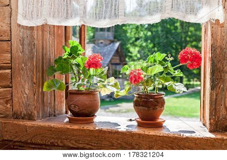 Geranium red flowers on the window of old rural wooden house in sunny day