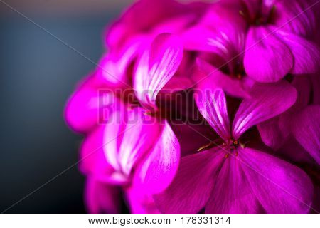Beautiful fairy dreamy magic pink purple flowers on faded blurry background soft selective focus copyspace for text