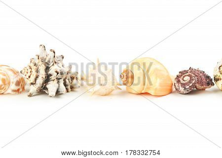 Sea shells on the white background, close up