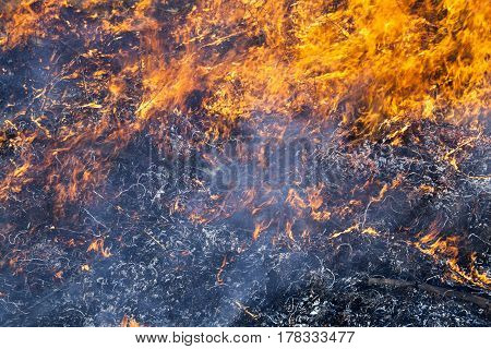 Big fire in the field. Close up.