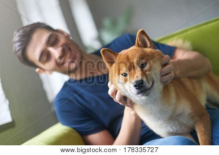Close up portrait of Shiba Inu dog face sitting on green sofa with owner. Best friend concept. Young caucasian male in casual t-shirt playing with his cute pet on couch at home stroking and petting