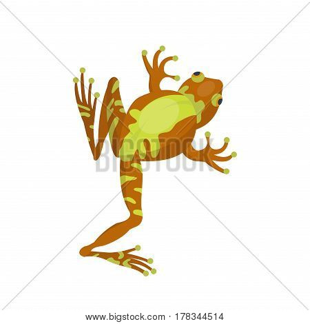 Frog cartoon tropical brown animal cartoon nature icon funny and isolated mascot character wild funny forest toad amphibian vector illustration. Graphic ecosystem croaking hop drawin.