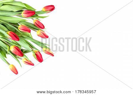 Spring flowers tulips in a corner of the frame on a white background. Top view