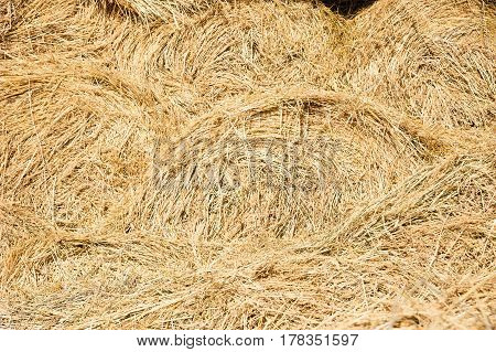 Storage With Piles Of Stacks Of Hay