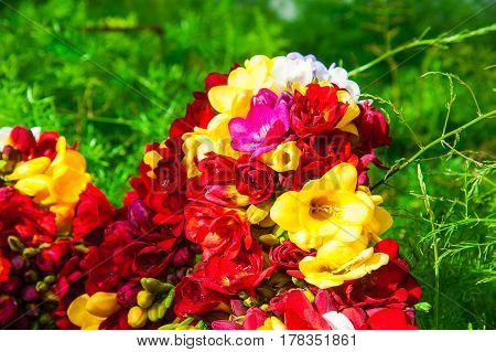 Bouquet Of Various Colorful Freesias