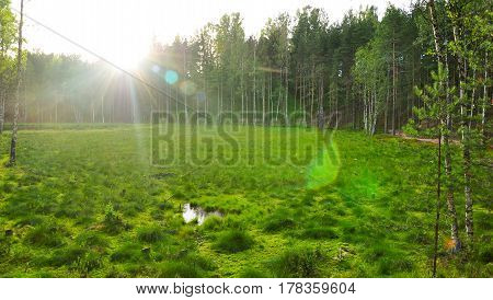 Waterlogged, Overgrown Lake In The Forest. Northern Woods Landscape. Green Summer Photo