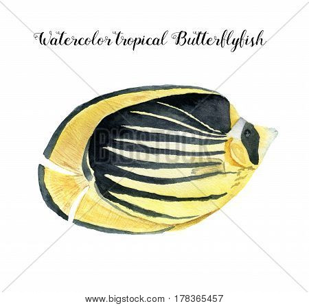 Watercolor Butterflyfish. Hand painted tropic fish isolated on white background. Underwater animal illustration for design, fabric or print