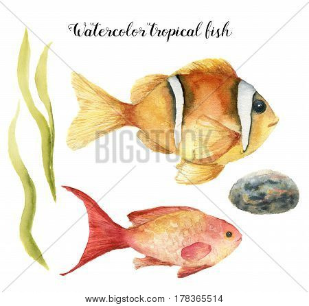 Watercolor tropical fish. Hand painted Sea goldie and Clownfish, seaweed, stone isolated on white background. Underwater animal illustration for design, fabric or print