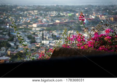 View from balcony with lush red flowers to residential roofs