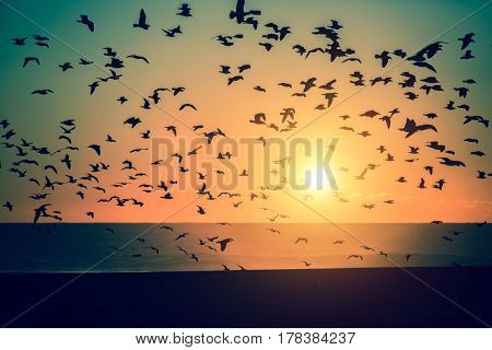 Silhouettes flock of Seagulls over the Ocean during amazing sunset.