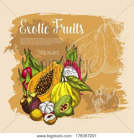 Exotic fruits poster. Vector harvest of papaya and mangosteen, tropical yuzu and guava, lychee and dragon fruit. Juicy carambola star fruit and passionfruit maracuya for organic shop