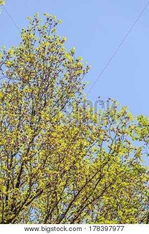 Top view of big green tree with blue and clear sky in background.