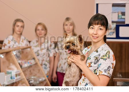 Portrait of happy female veterinarian examining yorkshire terrier in veterinary clinic