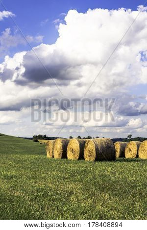 Round bales stored in a field - vertical format
