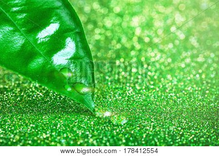 Fresh green leaf with water drops blurry texture background with light effect