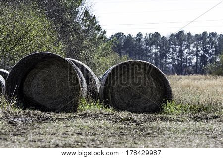 Improperly stored round hay bales on the side of a field