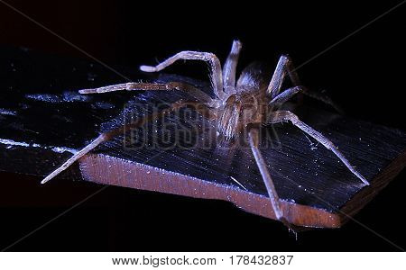 Spider on subject and black blackground and Macro close_up