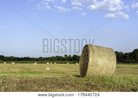 One round hay bale close up to the right with other bales in the background and blue skies