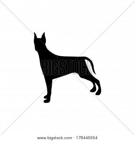 black figure doberman pinscher dog animal vector illustration