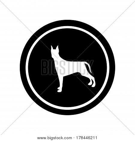 circular frame with figure doberman pinscher dog animal vector illustration